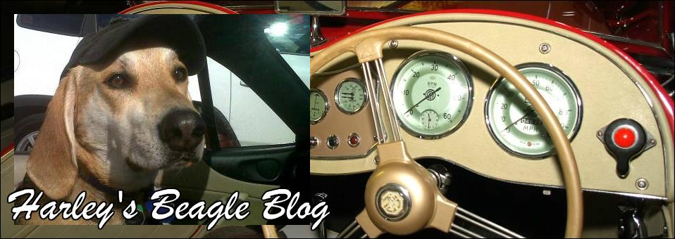 Harley's Beagle Blog January 2016