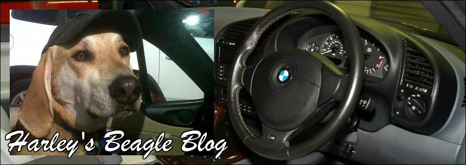 Harley's Beagle Blog March 2016