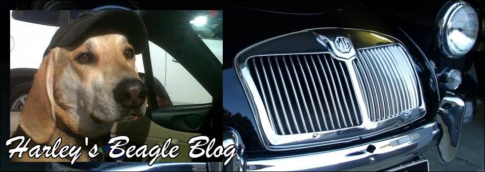 Harley's Beagle Blog February 2016