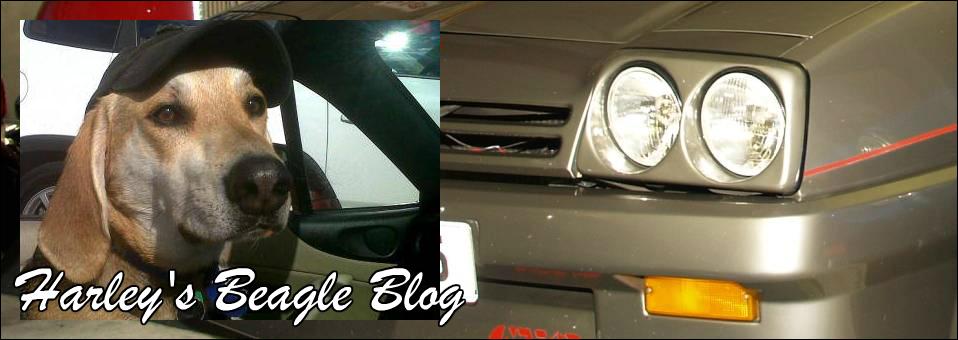 Harley's Beagle Blog June 2015