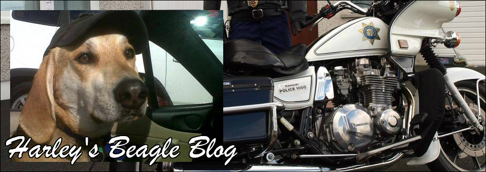 Harley's Beagle Blog December 2015